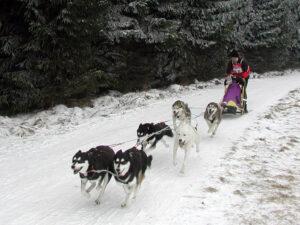 Hundeschlittenrennen in Benneckenstein